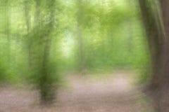 Flyttande träd i skogen royaltyfri bild