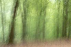 Flyttande träd i skogen arkivfoto