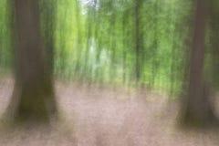 Flyttande träd i skogen royaltyfria foton