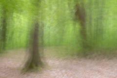 Flyttande träd i skogen arkivbilder