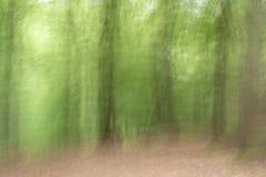 Flyttande träd i skogen royaltyfria bilder