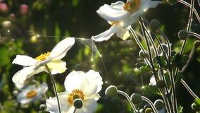 Flyttande vita blommor arkivfilmer