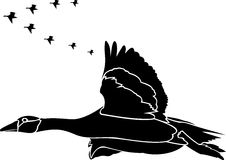 Flyttfåglar Arkivbilder