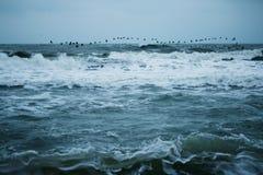 flyttning & hav Royaltyfri Fotografi