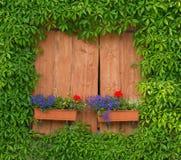 Fönster med blommaaskar och grönt löst vin Arkivfoton