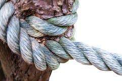 Fnurenrep i träd Royaltyfri Bild