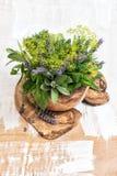 新鲜的草本莳萝,麝香草,贤哲,淡紫色,薄菏,蓬蒿 健康fo 免版税库存照片