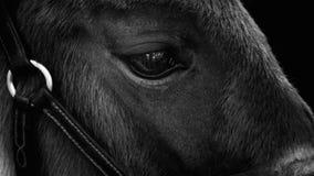 Foal αλλαγή του Στοκ φωτογραφία με δικαίωμα ελεύθερης χρήσης