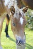 foal δάσος νέο Στοκ Φωτογραφίες