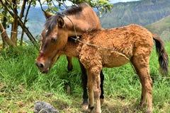 foal η φοράδα της Στοκ Εικόνες