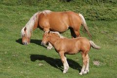Foal και φοράδα Στοκ φωτογραφία με δικαίωμα ελεύθερης χρήσης