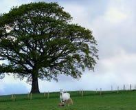 foal μητέρα Στοκ Φωτογραφία
