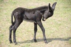 Foal ξύπνησε Στοκ εικόνα με δικαίωμα ελεύθερης χρήσης