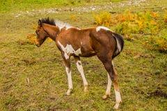 Foal που στέκεται σε έναν πράσινο τομέα Στοκ φωτογραφία με δικαίωμα ελεύθερης χρήσης
