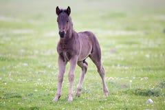 Foal που στέκεται στο λιβάδι Στοκ Εικόνες