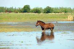 Foal που στέκεται στο τοπίο νερού Στοκ Φωτογραφίες