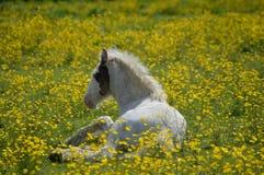 Foal στις νεραγκούλες Στοκ Φωτογραφίες