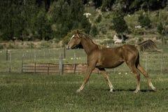 Foal στον τομέα στοκ φωτογραφία με δικαίωμα ελεύθερης χρήσης