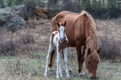 Foal το άλογο βόσκει το βουνό Στοκ φωτογραφία με δικαίωμα ελεύθερης χρήσης