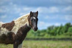 foal royalty-vrije stock afbeelding
