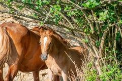 foal royalty-vrije stock foto