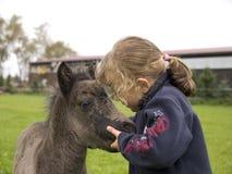 foal κορίτσι Στοκ Εικόνα