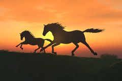 Foal. Scene two horses on background of the sundown Stock Photography