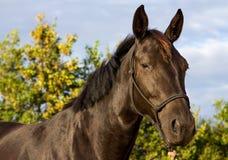 Foal Στοκ φωτογραφία με δικαίωμα ελεύθερης χρήσης