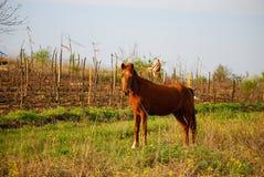 foal stock afbeeldingen