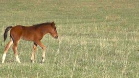 foal stock footage