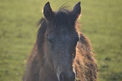 foal Στοκ εικόνα με δικαίωμα ελεύθερης χρήσης