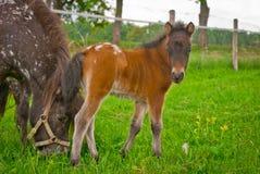 foal stock foto's