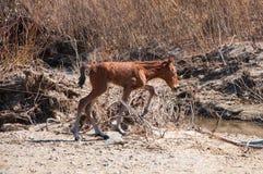 foal stock fotografie