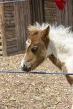 foal στοιχείων σχεδίου πορτρέτο Στοκ εικόνες με δικαίωμα ελεύθερης χρήσης