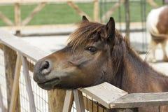 foal στοιχείων σχεδίου πορτρέτο Στοκ φωτογραφίες με δικαίωμα ελεύθερης χρήσης