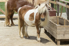 foal royalty-vrije stock fotografie