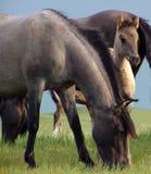 Foal Stock Photos