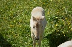 Foal στοκ φωτογραφία