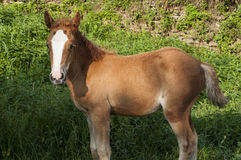 Foal amid green vegetation Royalty Free Stock Image