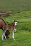 Foal Beauty Stock Photos