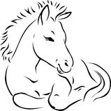 Foal - black outline illustration Royalty Free Stock Photo