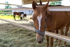 Foal close up in a pen and standing behind a horse in a blurred background royalty free stock images