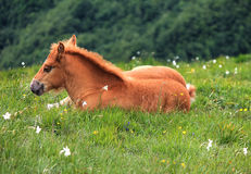 Foal on the grass Stock Photo