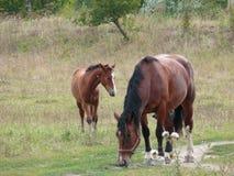 foal horse 库存照片