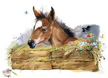 Free Foal Illustration. Watercolor Farms Animal Collection. Royalty Free Stock Photography - 129910437