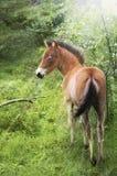 Foal in lampadina Fotografie Stock