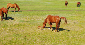 Foal with mare Stock Images