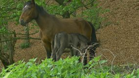 Foal and mare in forest