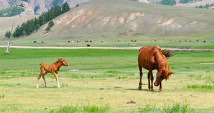 Foal, Mare, Horse, Young, Animal Royalty Free Stock Photo