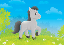Foal on a meadow Royalty Free Stock Photos